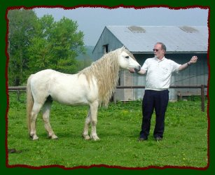 Apple Jack - Welsh Stallion Pony - For Reference Only